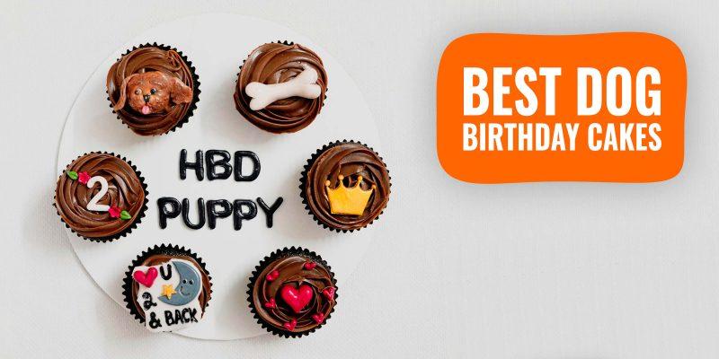 15 Best Dog Birthday Cakes – Warning, Reviews & Homemade Recipes