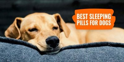 Best Sleeping Pills for Dogs