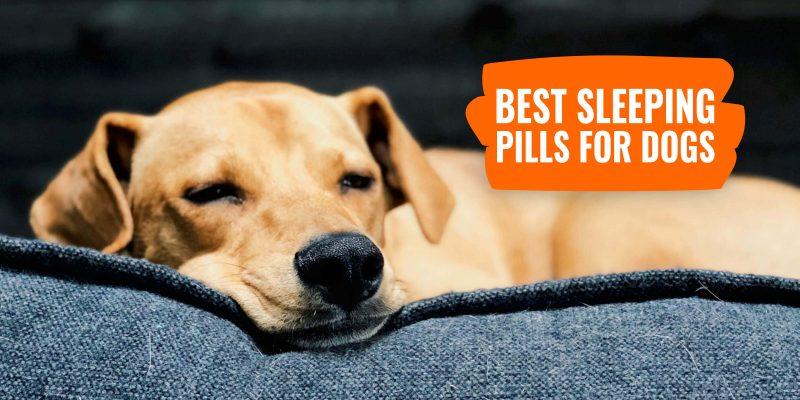 best sleeping pills for dogs
