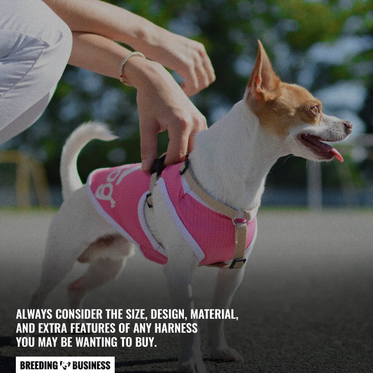 choosing the best small dog harness