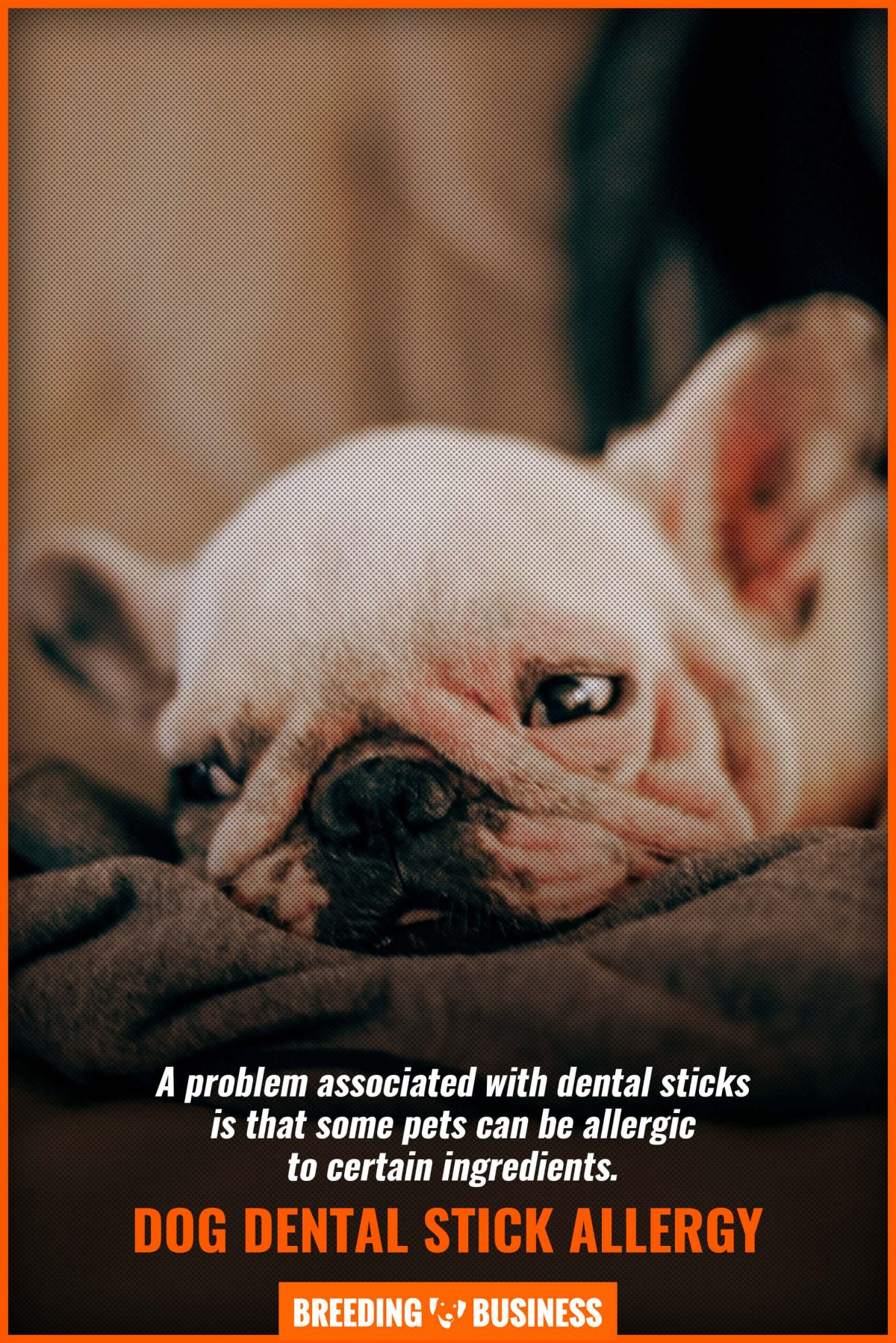 dog dental stick allergy