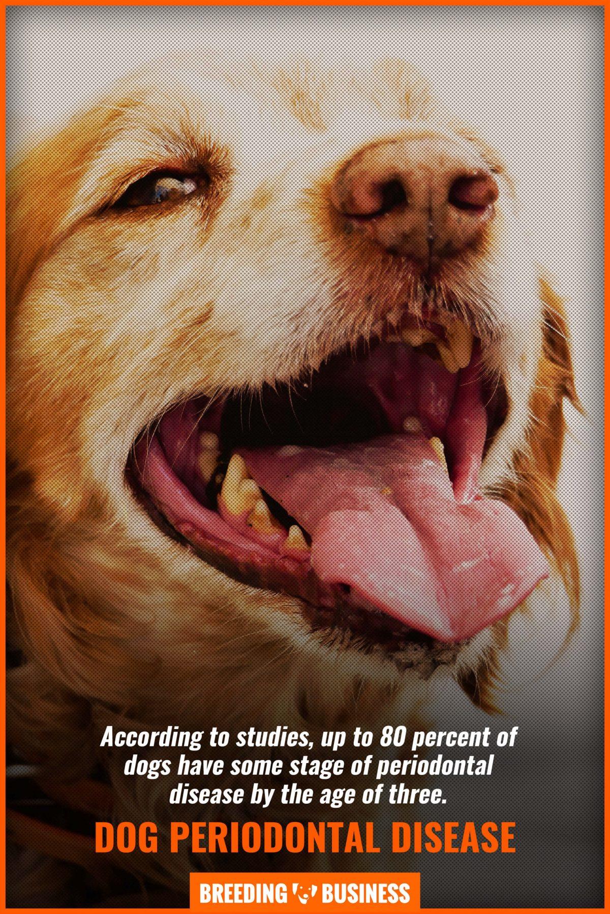 dog periodontal disease