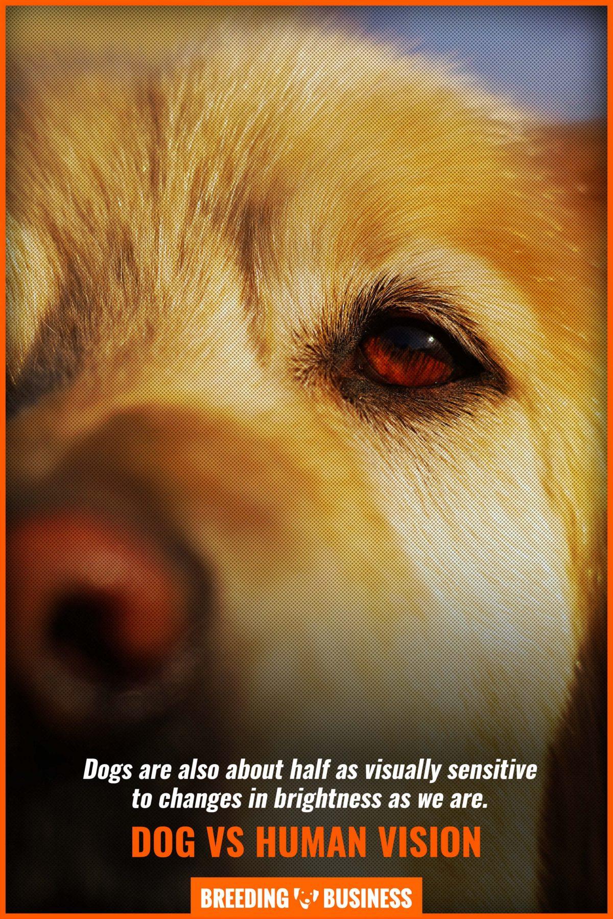 dog vs human vision