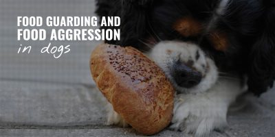 Food Guarding and Food Aggression in Dogs