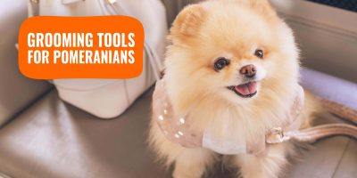 Grooming Tools for Pomeranians