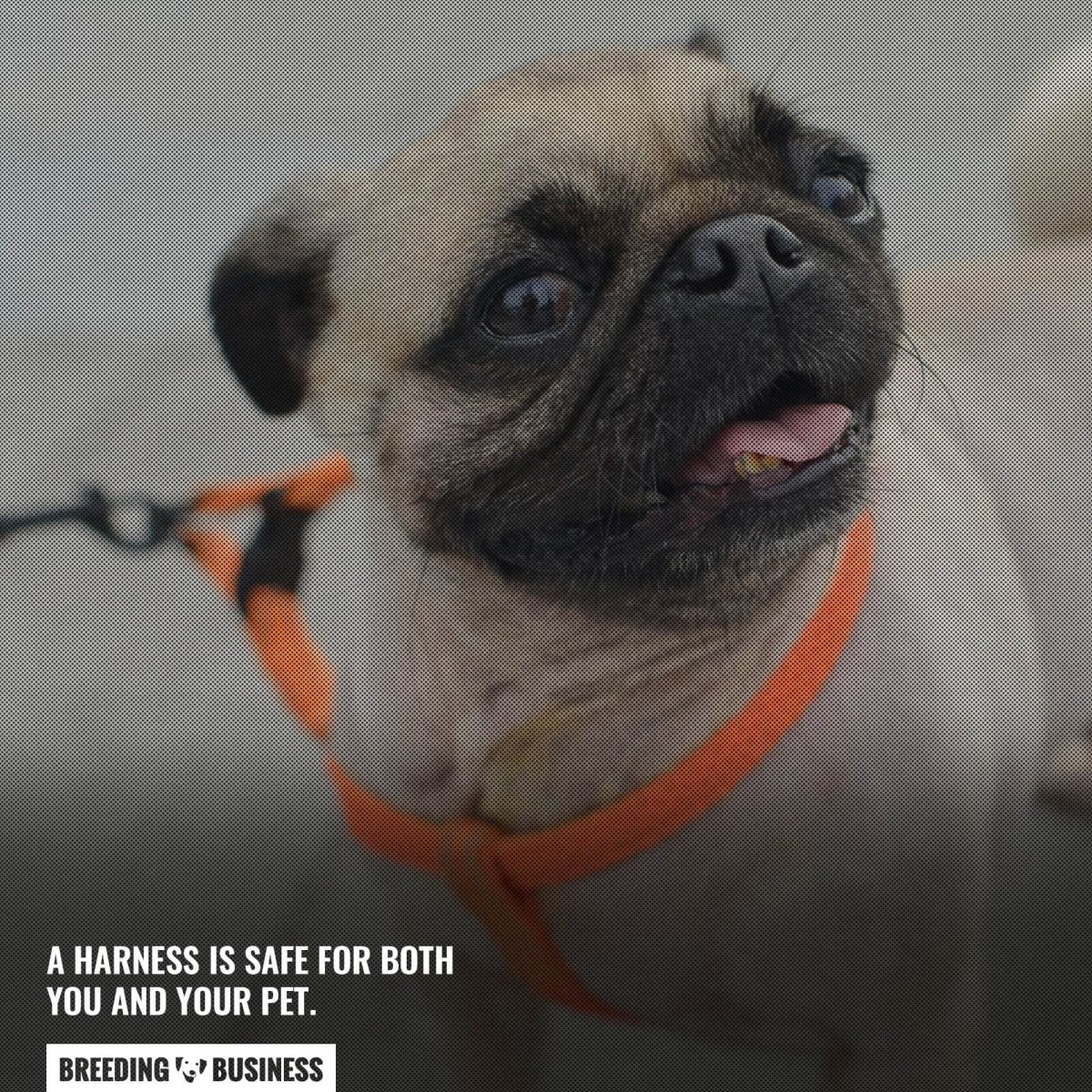 harness safety for you and your dog