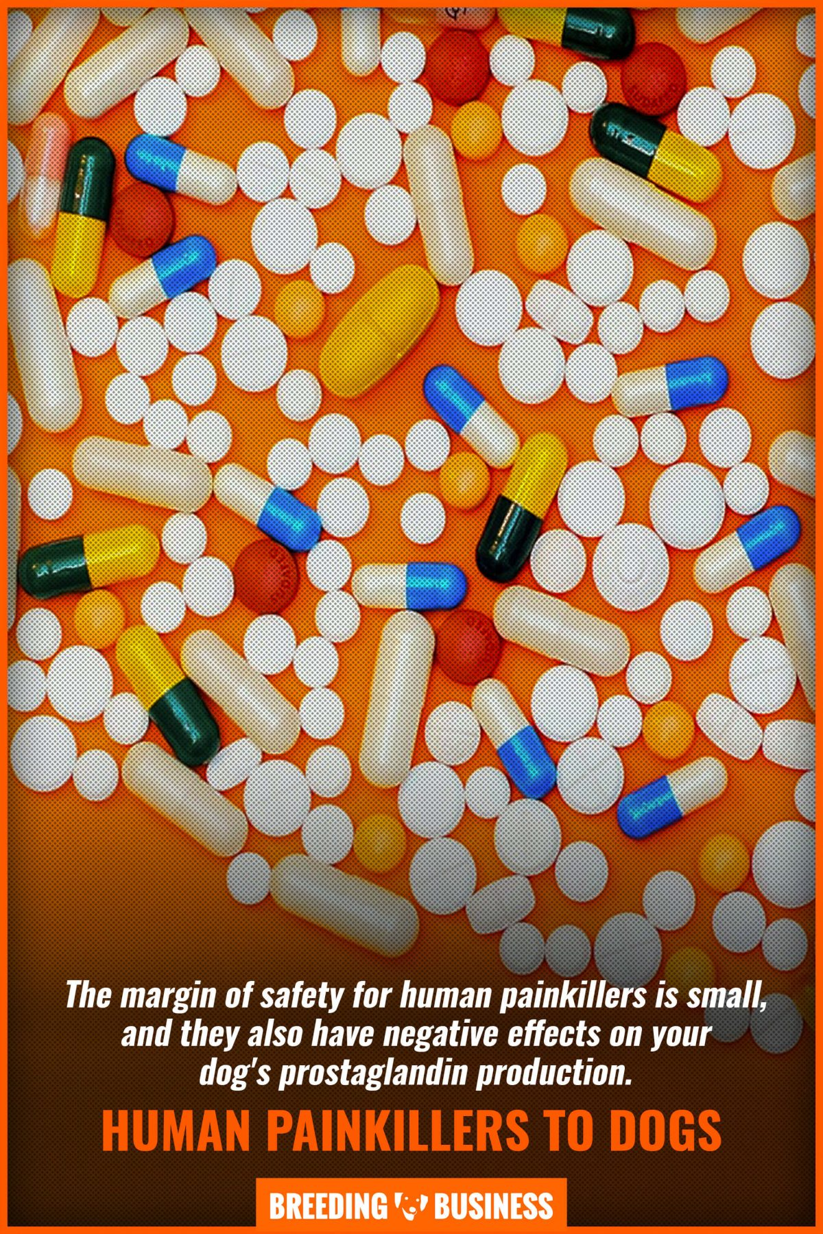 human painkillers to dogs