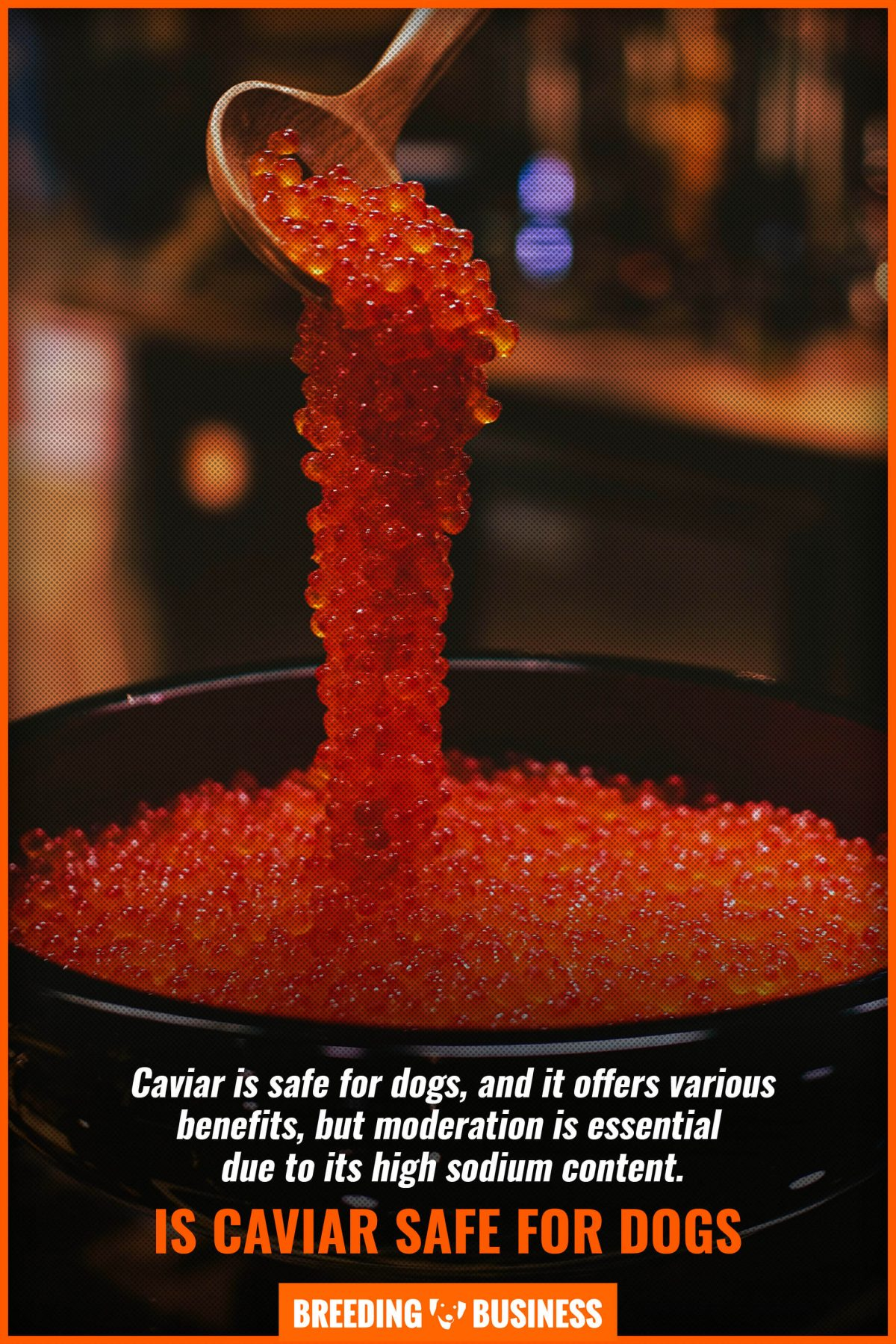 is caviar safe for dogs