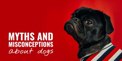 Myths and Misconceptions About Dogs