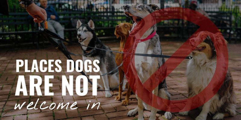 places dogs are not welcome in