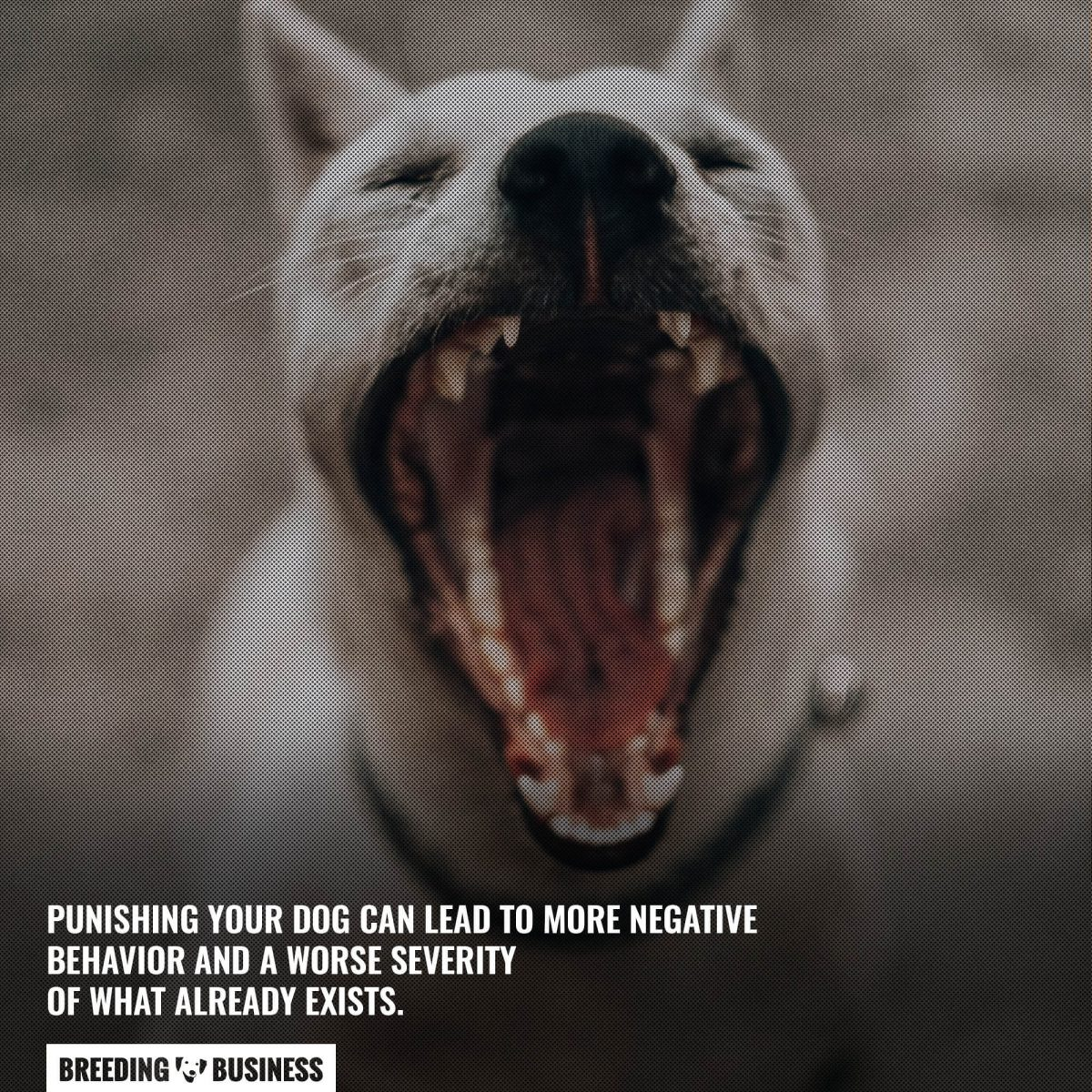 punishing possessive aggressive dogs