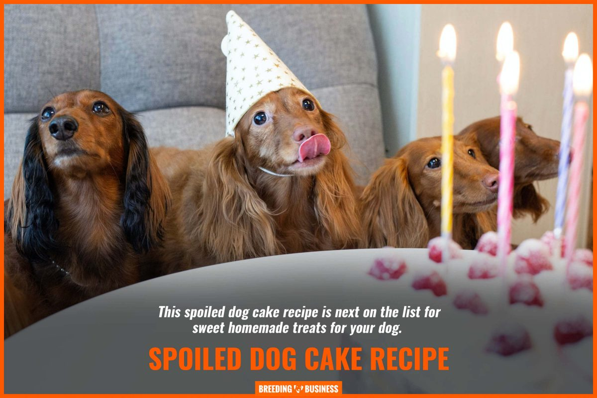 spoiled dog cake recipe