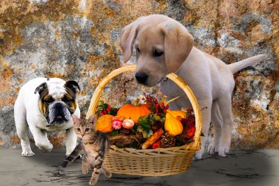 Thanksgiving Dog Names: 80+ Puppy Names Inspired By The Holiday