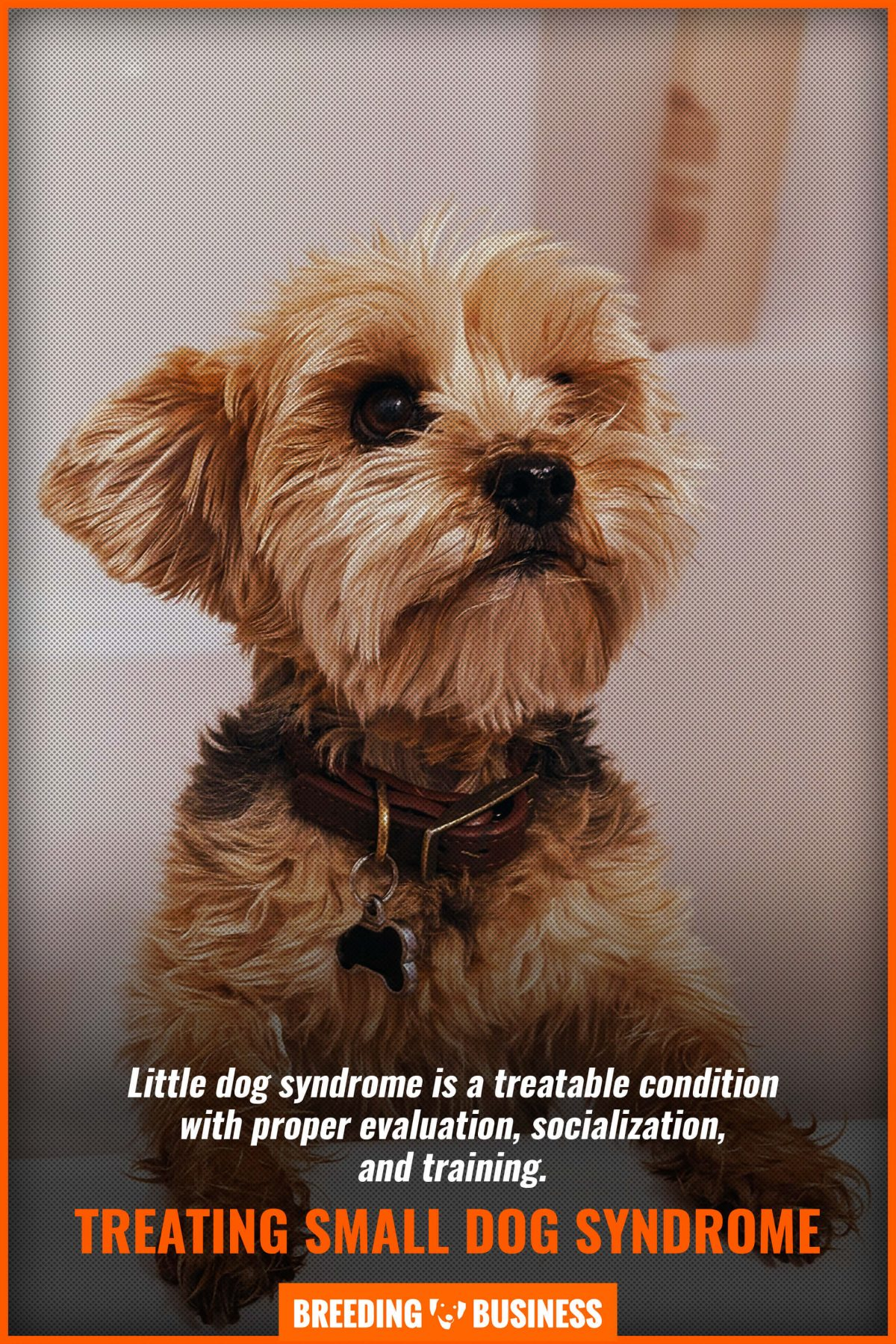 treating small dog syndrome