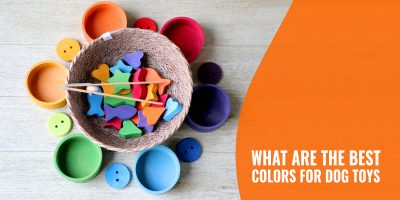 What are The Best Colors for Dog Toys