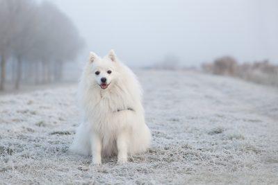Wintery Dog Names