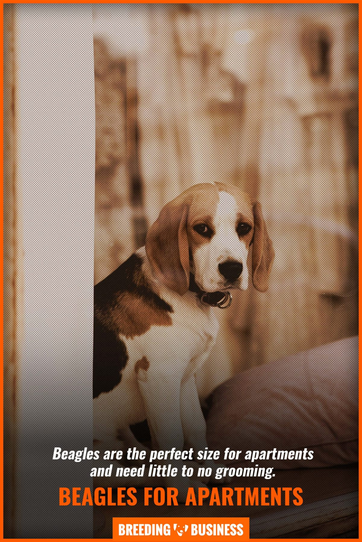 beagles for apartments
