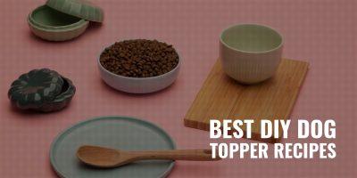 15 Best DIY Dog Topper Recipes