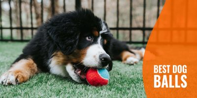 12 Best Dog Balls – For All Sizes of Dogs