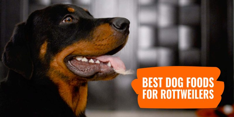 10 Best Dog Foods for Rottweilers – Nutritional Requirements & Top Reviews!