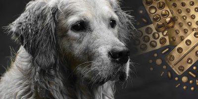 10 Must-Have Dog Health Supplements & Vitamins