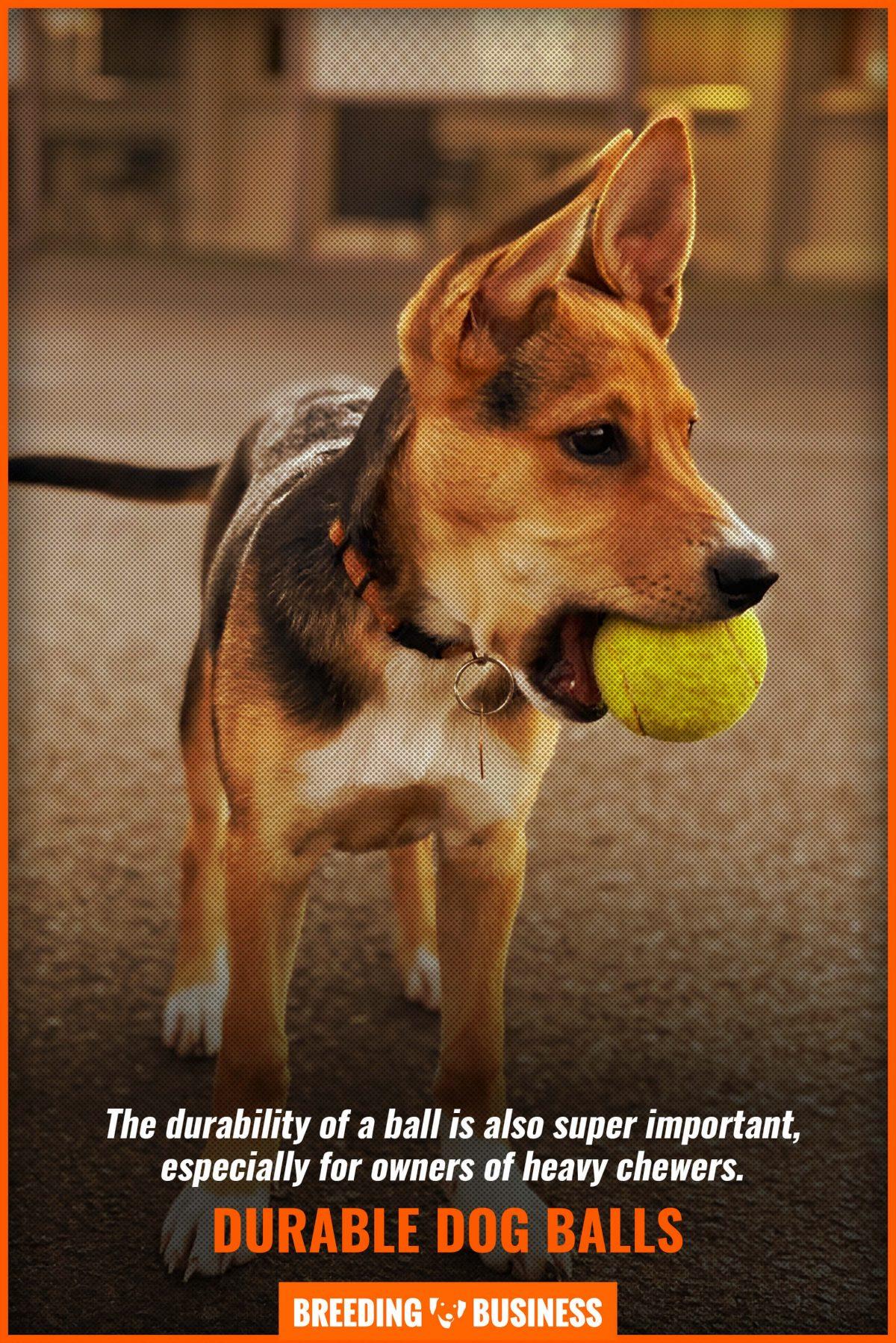 durable dog balls