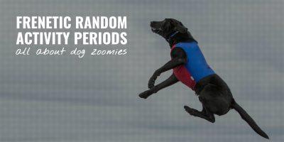 Frenetic Random Activity Periods
