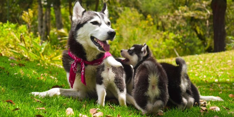 Genetics, Parents & Environment in Dog Breeding