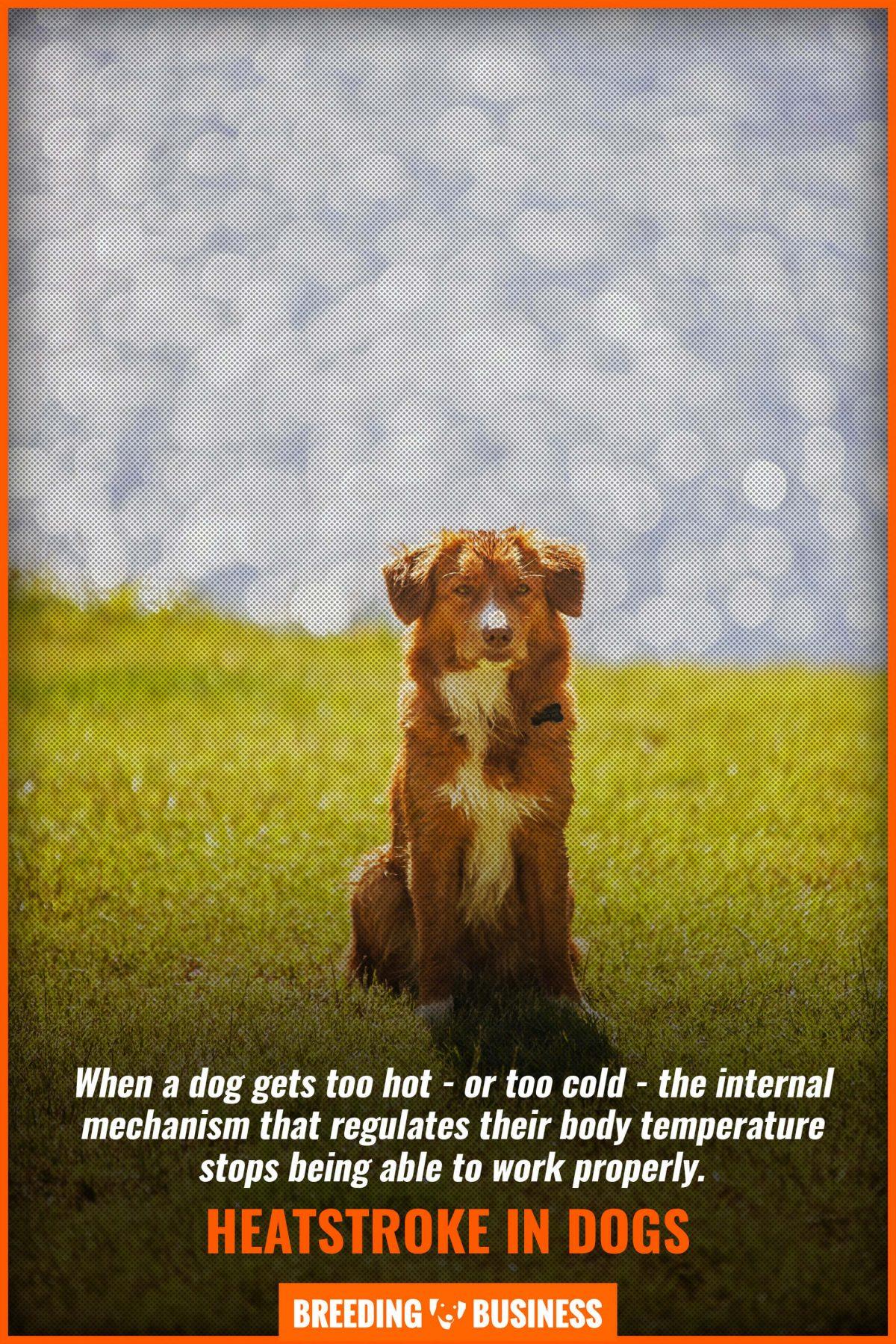 heatstroke in dogs while walking