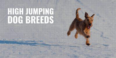 High Jumping Dog Breeds