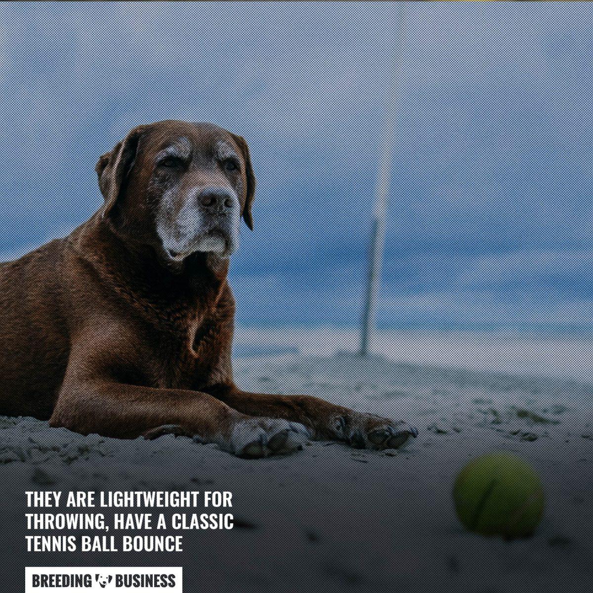 hyper pet tennis balls dog toy