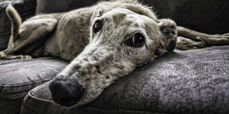 7 Luxury Dog Sofa Beds (That Are Affordable)