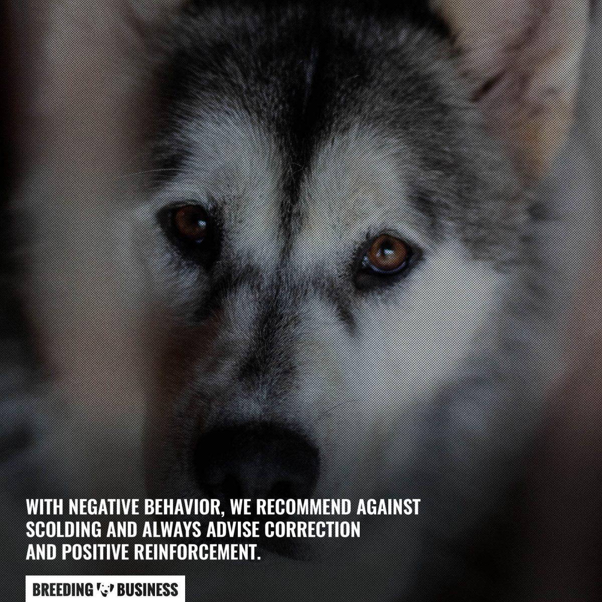positive reinforcement dog zoomies