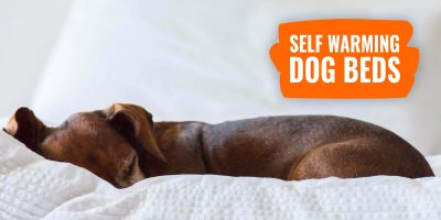 Self-Warming Dog Beds – How Do They Work, Reviews & FAQ