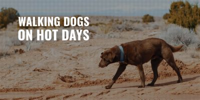 Walking Dogs On Hot Days
