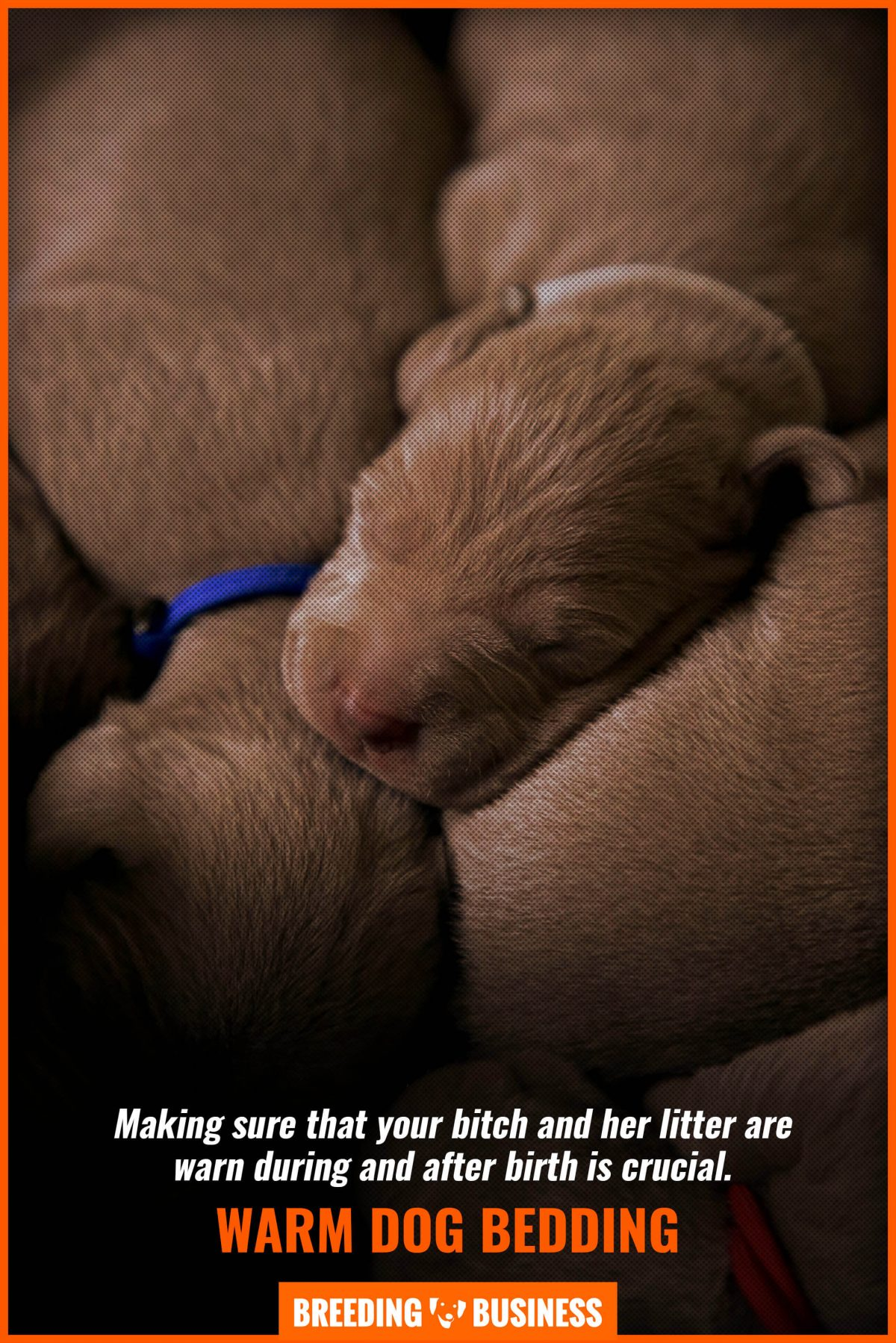 warm dog bedding