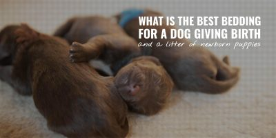 What Is The Best Bedding For a Dog Giving Birth