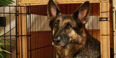 10 Best Large Dog Crates – Reviews & Buying Guide