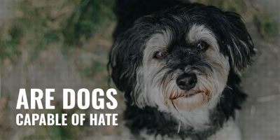 Are Dogs Capable Of Hate?