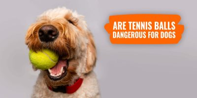 Are Tennis Balls Dangerous for Dogs