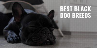 20 Best Black Dog Breeds