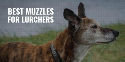 10 Best Muzzles For Lurchers