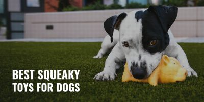 Best Squeaky Toys for Dogs
