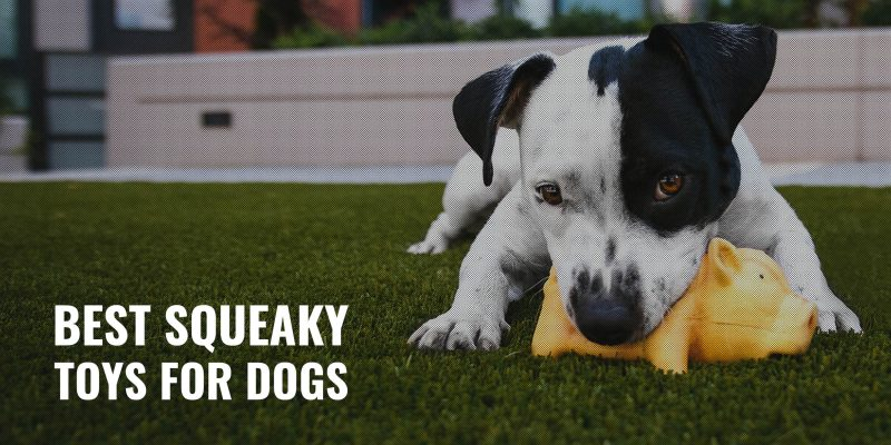 15 Best Squeaky Toys for Dogs – Rubber, Plush, Balls & High-Pitched Dog Toys