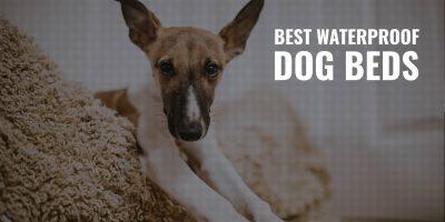 12 Best Waterproof Dog Beds – Reviews, Water-Resistance & FAQs