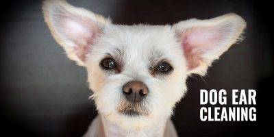 5 Best Ear Cleaners for Dogs w/ Ear Cleaning Guide