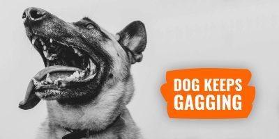 Dog Keeps Gagging – Signs, Causes, Treatments & FAQ