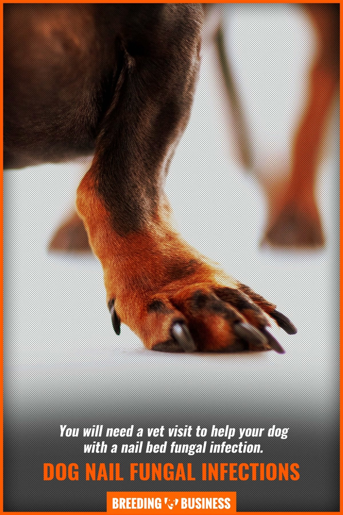 dog nail fungal infections