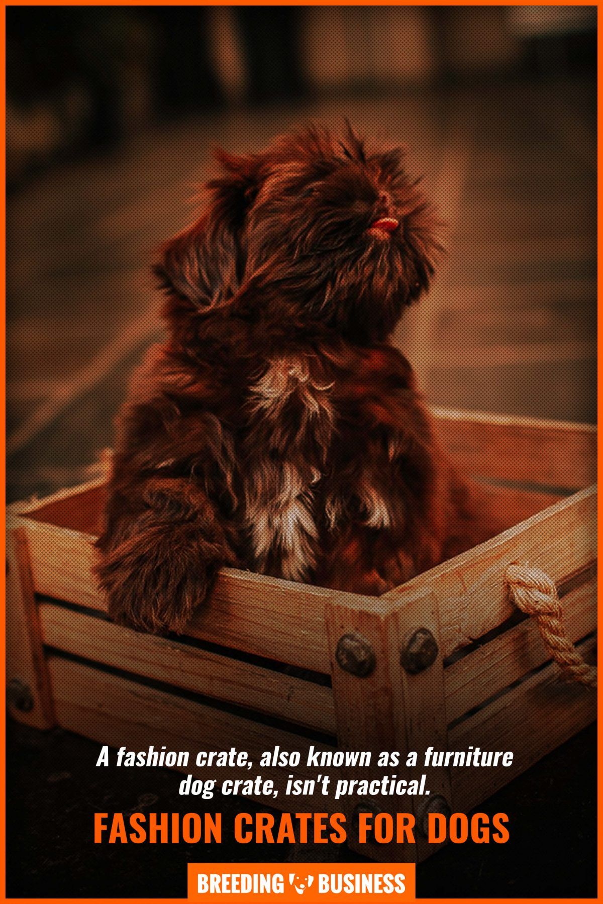 fashion crates for dogs