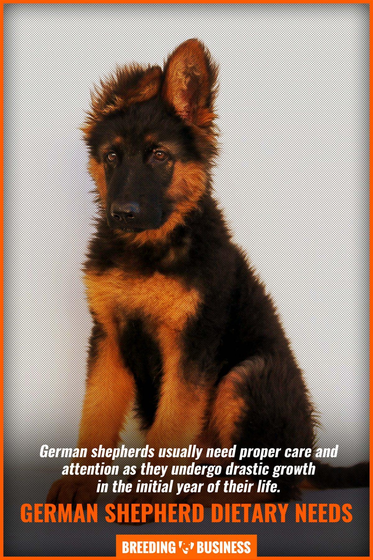 german-shepherd-dietary-needs